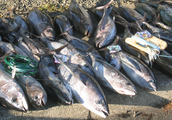 click here to go to Dee's Tuna and Pelagic Fishing Page